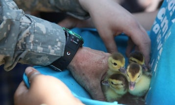 Air Force vet helps reunite a mother duck with her ducklings on Mother's Day