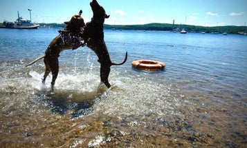 It's the dog days of summer, so here are some adorable photos of Coast Guard dogs Thor and Loki