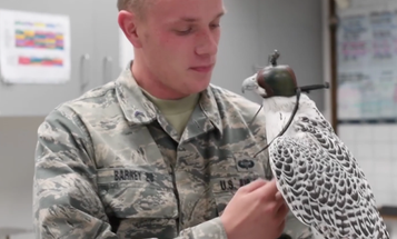 The Air Force Wants To Use Falcons To Punch Drones Out Of The Sky