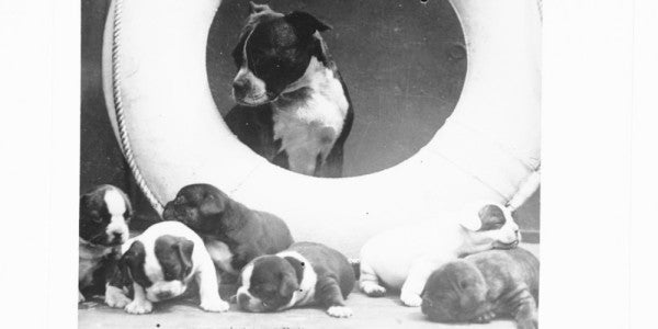 The Many Dogs Of The USS Texas