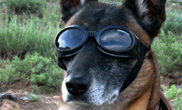 Sure, All Dogs Look Good in Sunglasses, But This One…