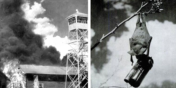That Time The US Military Tried To Use Bats As Bombers During World War II