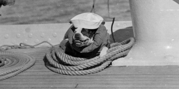 Friday Dog: A Little Bulldog On The Old USS New York