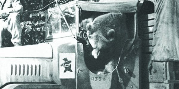 This 440-Pound Nazi-Fighting Military Bear Is Getting His Own Animated Movie