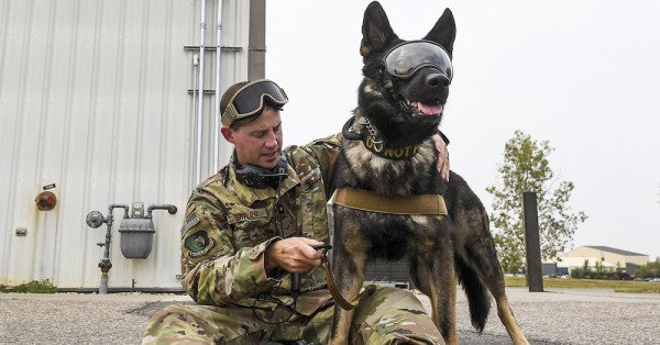 Friday Dog: Shouldn't Dog Handlers Also Wear A 'Do Not Pet' Warning?