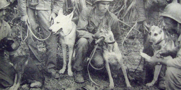 Friday Dog: War Dogs In The Phillipines During World War II