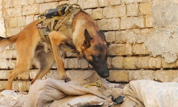 Friday Dog: Just Another Day in Baghdad