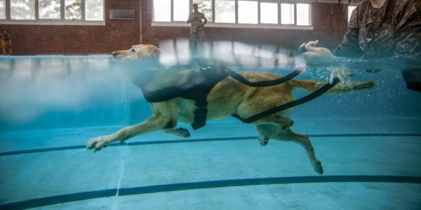 Friday Dog: In the Marines, Even Dogs Must Swim