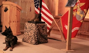 Bond Between A Marine And His Dog Continues After Death