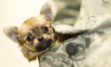 8 Photos Of Deployment Puppies That Will Make Your Day Better