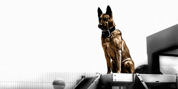 ISIS Fighters Reportedly Savaged By American Military Working Dog
