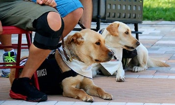 This Is What It Takes To Be A Warrior's Service Dog