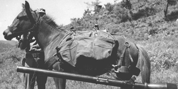 Marine War Horse Honored For Battlefield Bravery In Korean War