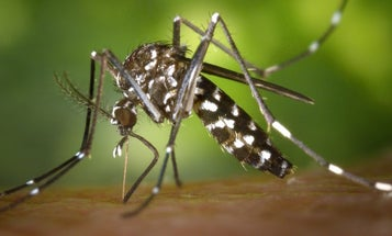 At Least 33 US Troops Have Contracted Zika