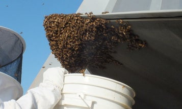 This F-22 Raptor Was Grounded After Being Invaded By 20,000 Honey Bees