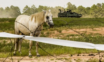 The Reason Fort Polk Needs To Get Rid Of 700 Horses