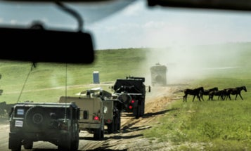 This Is What Will Happen To 700 Feral Horses At Fort Polk