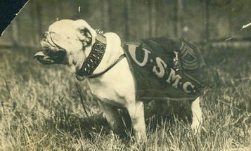 If You Thought Chesty The Bulldog Was The Original Corps Mascot, You'd Be Wrong