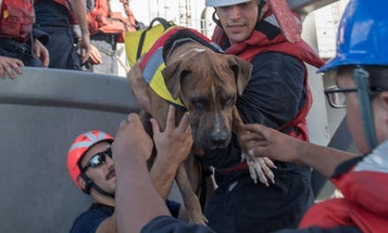 Navy Amphib Saves Boaters (And Their Dogs) Who Were Lost At Sea For 6 Months