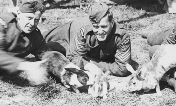 The Animals of War: The Military Rabbits Of World War I
