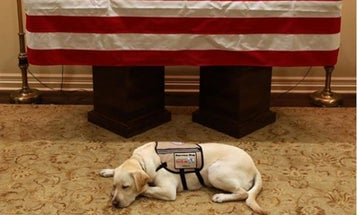 Photo of George H.W. Bush's Service Dog Mourning At His Casket Pulls The Internet's Heartstrings