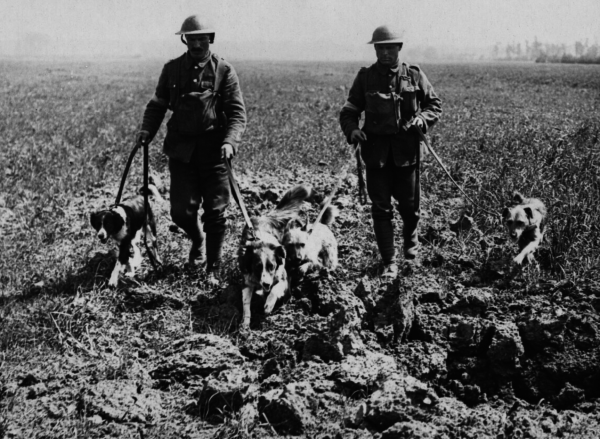 Friday Dog: What Are These World War I Dogs Doing?