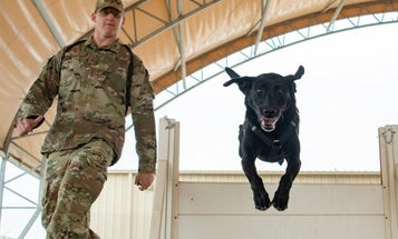 What Military Units Can Learn From The Rules And Suggestions Of My Local Animal Shelter