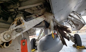 An F-16 Fighting Falcon fought a hawk and won