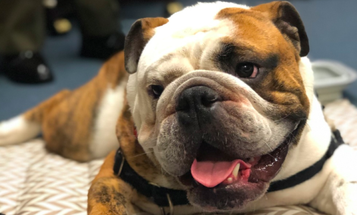 The best boy in the Marine Corps, Chesty XV, is living the good life
