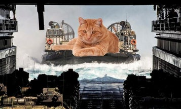 We talked to the unsung hero behind all those Military Giant Cat memes