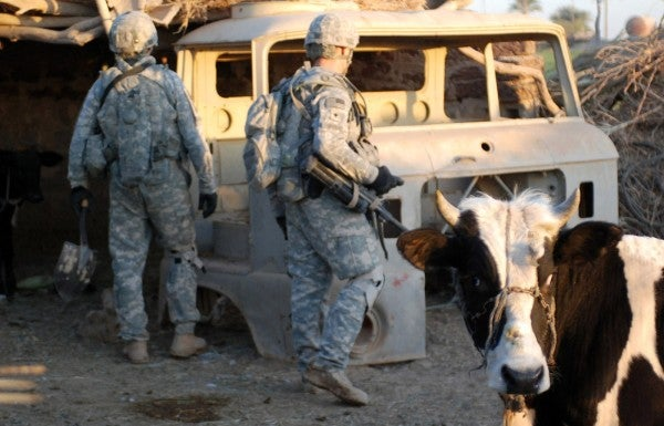 ISIS is reportedly using cows strapped with bombs for suicide missions