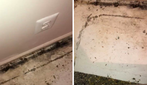 Military families are suing their private housing provider over 'rampant mold infestation' at Fort Meade
