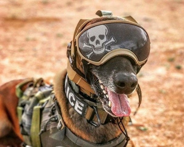 The Army wants to outfit dogs with tiny cameras and other advanced gear to make them even more effective in combat