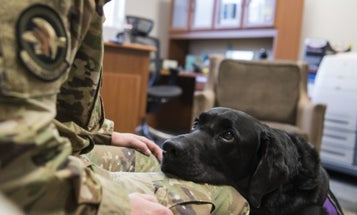 House passes bill that would stand up VA program for veterans to train service dogs