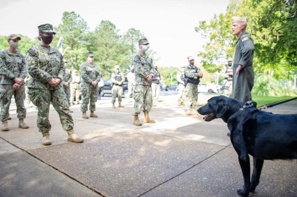 A retiring Navy dog sniffed out bombs for 6 years. Last week he received a commendation