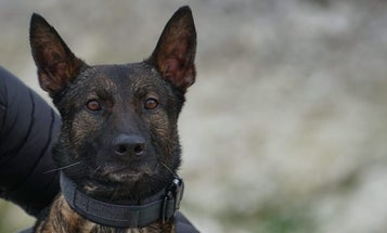 We salute this heroic military working dog for taking out the gunman who pinned his team down during a fierce firefight