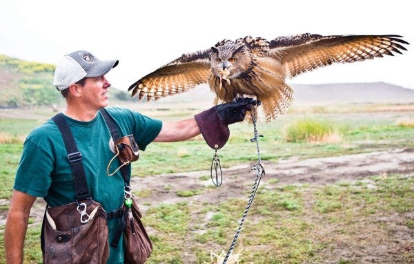 The Marine Corps had to hire a falconer to keep seagulls from harassing recruits at boot camp