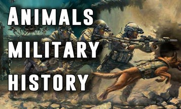 History of Animals in the Military: from Bears to Bees