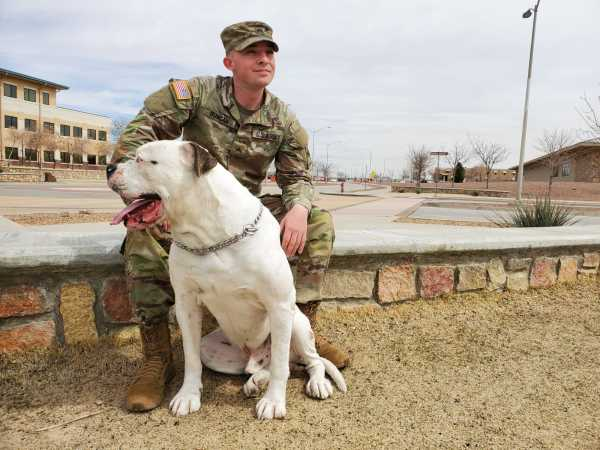 Meet Cooper Chester X, mascot of the Bulldog Brigade and Fort Bliss' very good boy