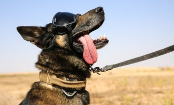 We salute 'The Dude' for being 'the coolest military working dog ever'