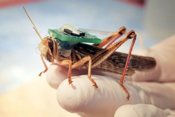 The Navy is experimenting with 'cyborg locusts' to sniff out explosives