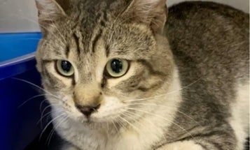 Cargo, the Air Force stowaway cat, finds new home and family in Maine