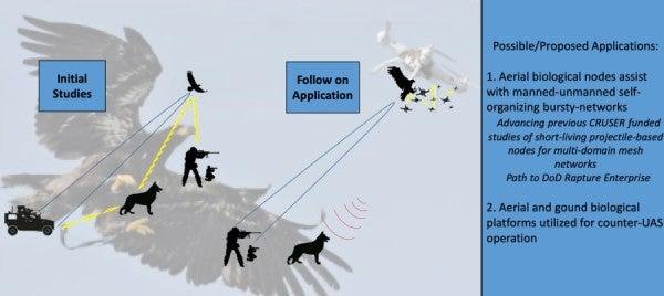 The Navy is working on bird internet
