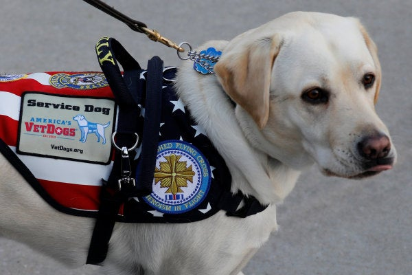President George H.W. Bush's service dog has a new job cheering up wounded troops at Walter Reed