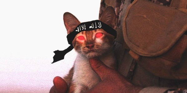 Adorable Kitten Becomes Unlikely Poster Child Of The Islamic State
