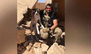 Save Harley! Air Guardsman struggles to stop deportation of his pup stuck at airport due to clerical error