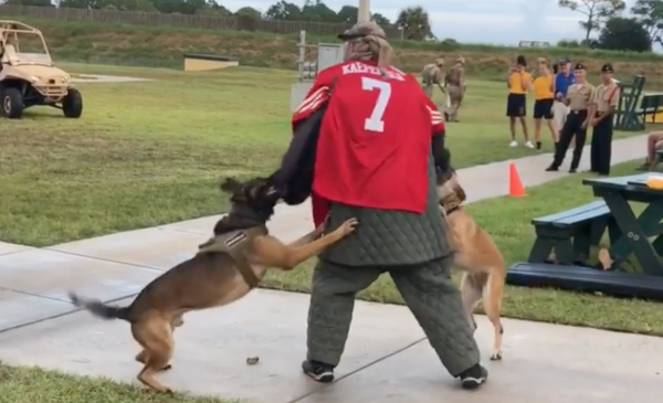 Naval Special Warfare Command cuts ties with SEAL museum over video of dogs attacking man in Colin Kaepernick jersey