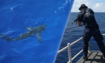 We salute the badass Coastie who opened fire on a friggin' shark that crashed his crew's swim call