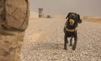 You're Gonna Want To Read This Twitter Thread About A Convoy, An Ambush, And A Good Dog
