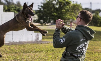 The Best Airborne K-9 You'll See All Week